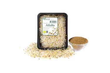 Biologische Kiemen Alfalfa (90 gram)