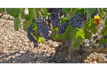 Biologisch Rode Wijn Voordeel Pakket