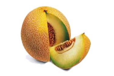 Biologische Galia Meloen (per stuk)