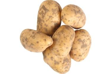 Biologische Aardappels Nicola nieuwe oogst (1 kilo)