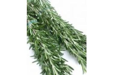 Biologische Rozemarijn (Greenfresh, 20 gram)