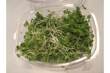 Microgroente Rucola (EKONOOM Microgroenten, 50 gram)