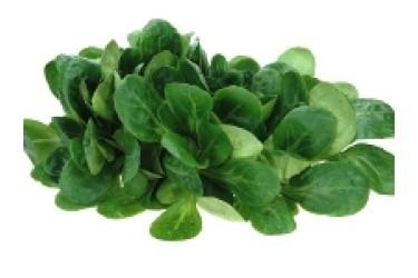Biologische Veldsla (75 gram)