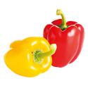 Biologische Paprika Duo (rood+geel)