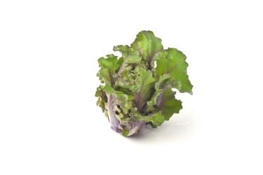 Biologische Flower Sprouts (250 gram, van Titus Galema Marknesse)