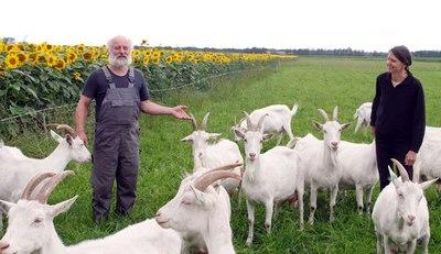 Hansektien geitenkaas